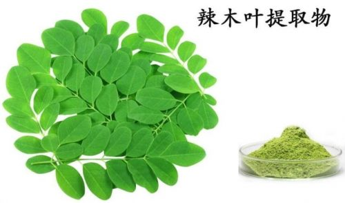 300g,Natural& High quality Moringa leaf Extract powder Increases the body s immune system 3