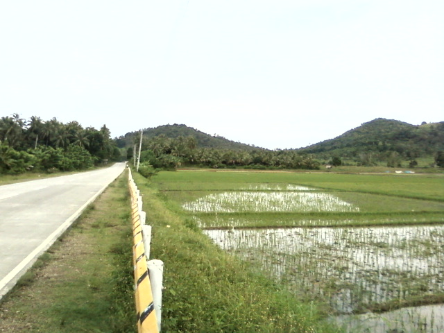 File:Tagasilay rice field 06.jpg