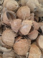 Paya - coconut shell.jpg