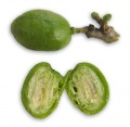 Bubut sirguelas - immature and unripe spanish plum.jpg