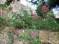 Valerian (Valeriana officinalis), Leighterton - geograph.org.uk - 1383492.jpg