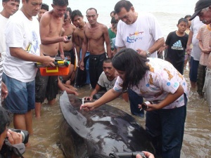 Beached Whale in Bolong